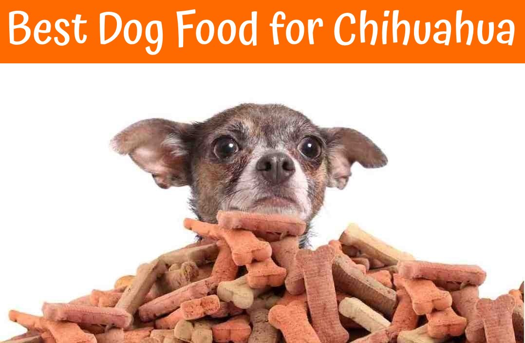 Best Dog Food For Chihuahua The Ultimate Guide In