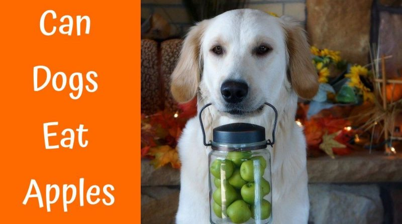 Can Dogs Eat Apples Best Question To Ponder Us Bones