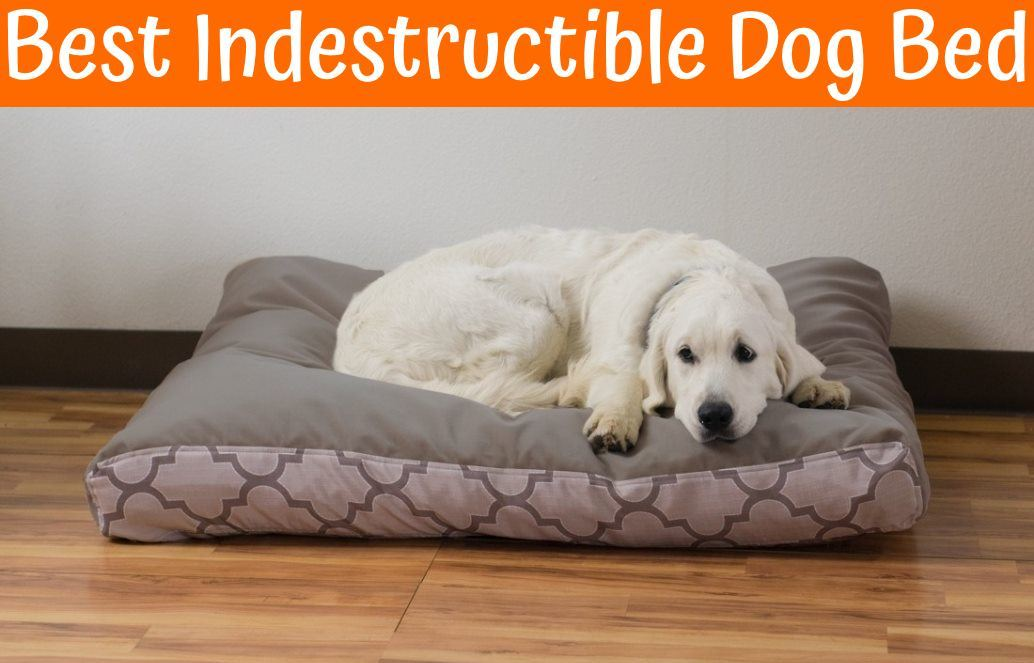Indestructible Dog Bed For Crate