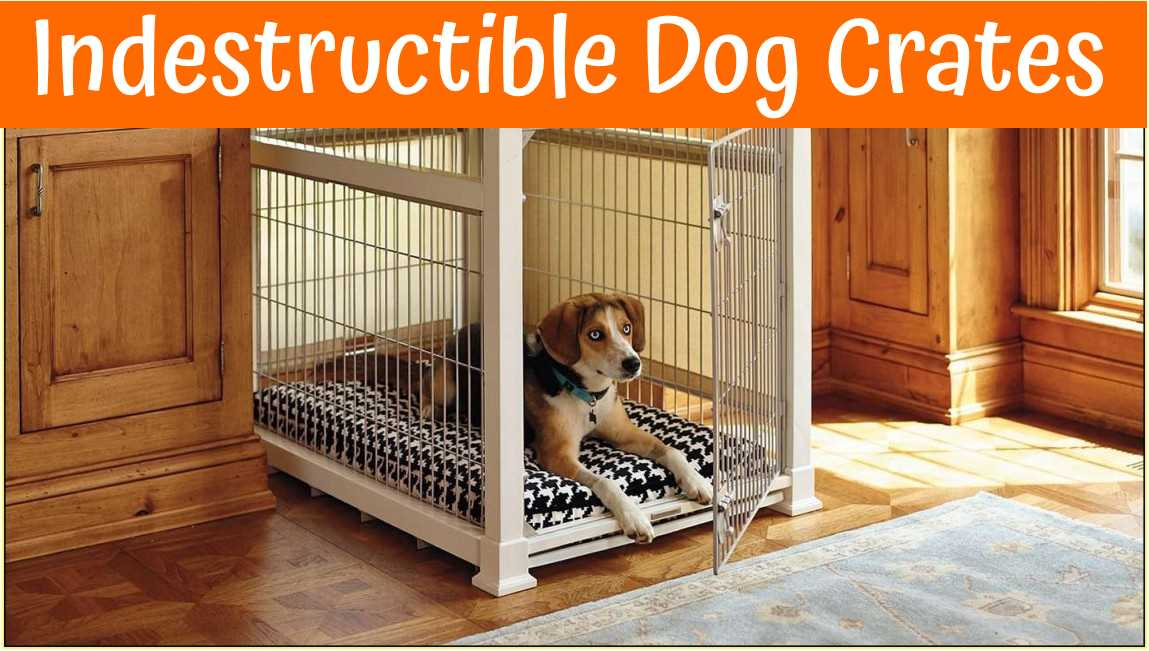 Top Rated Indestructible Dog Crates In 2018 Us Bones