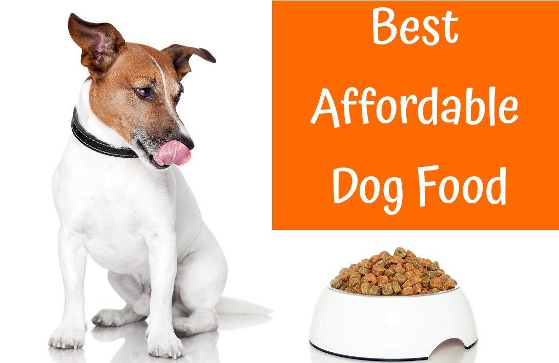 Best Inexpensive Dry Dog Food