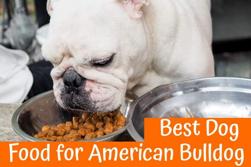 Best Dry Dog Food Joint Health