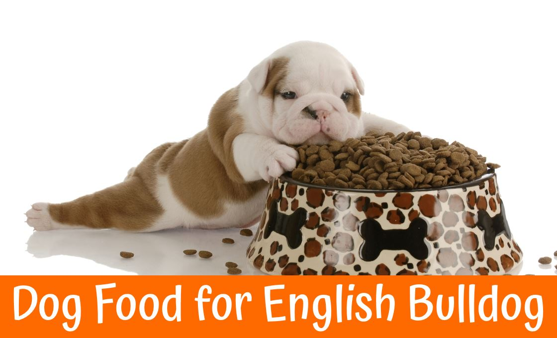 Best dog food for english bulldog us bones for Best dogs for you