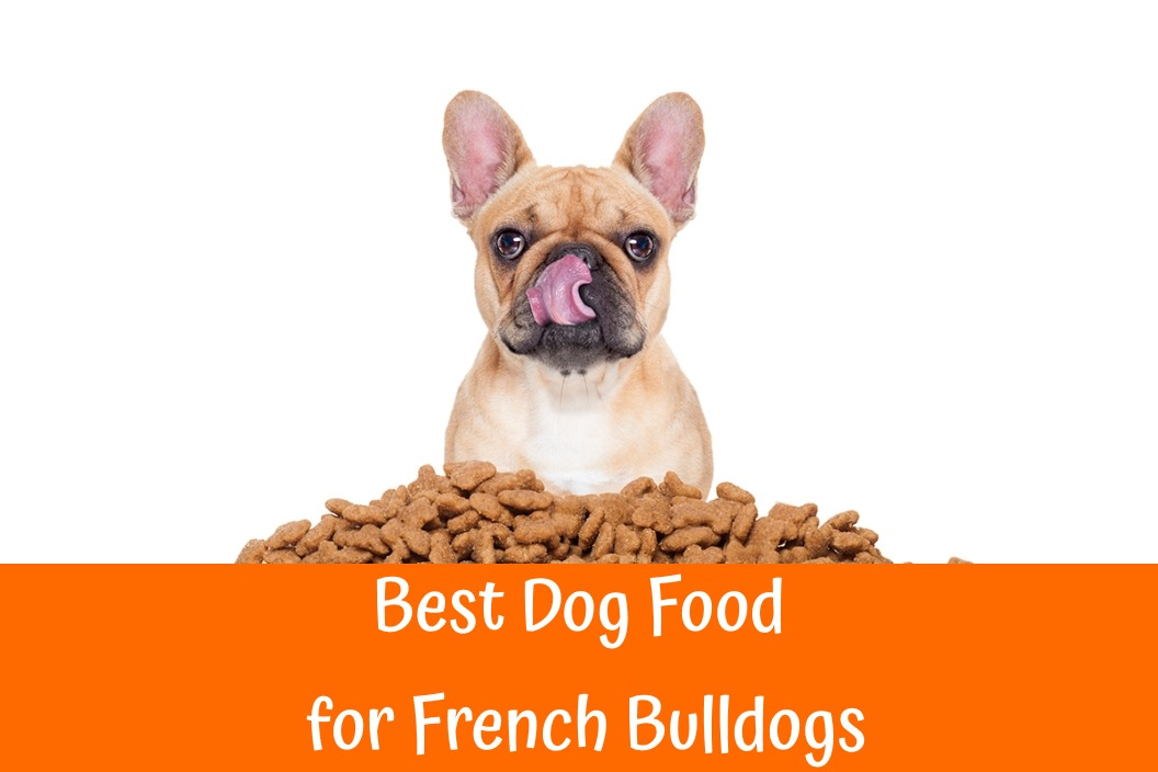 Guide to the best dog food for french bulldogs us bones for Best dogs for you