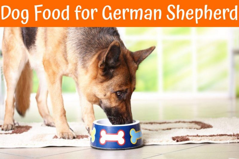 dog food for german shepherd puppy ultimate guide to the best dog food for german shepherd in 3070