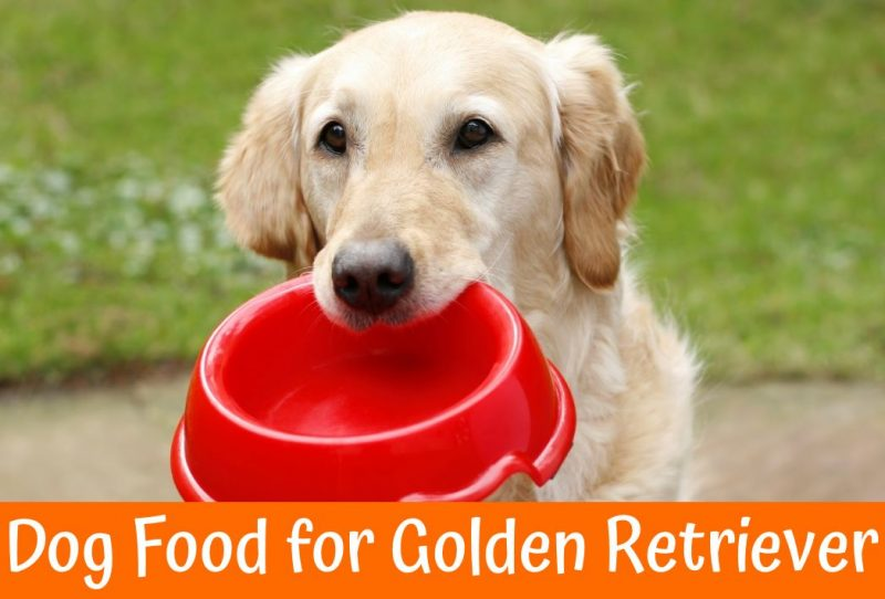 Dog Foods Made In Usa With Us Ingredients