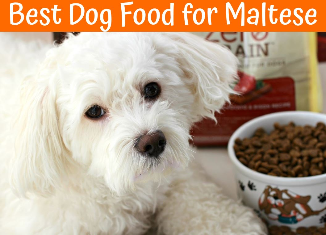 Puppy Diamond Dog Food >> The Best Dog Food for Maltese Buying Guide - US Bones