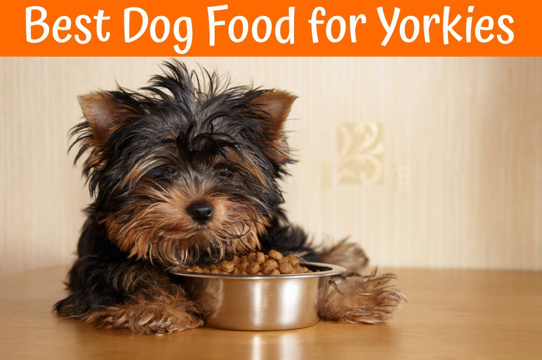 Best dog food for yorkies guide in 2018 us bones for Best dogs for you