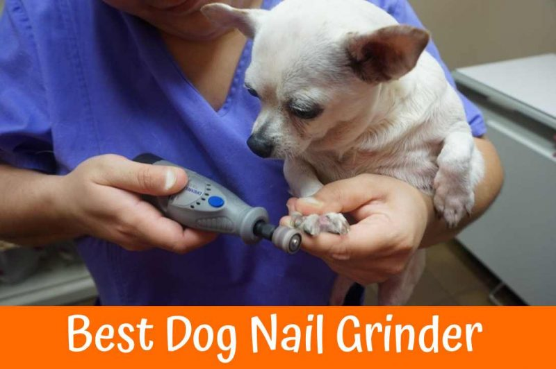 Best Dog Nail Grinder Guide in 2018 - US Bones
