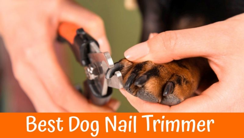 Best Dog Nail Trimmer