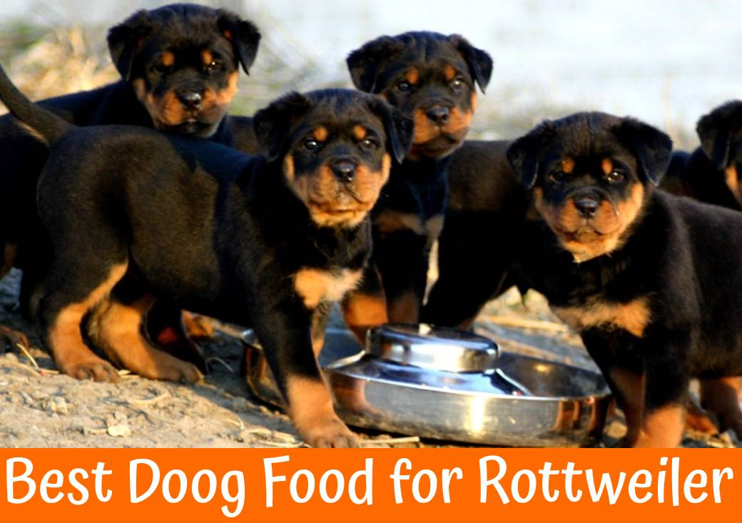 Best Doog Food for Rottweiler