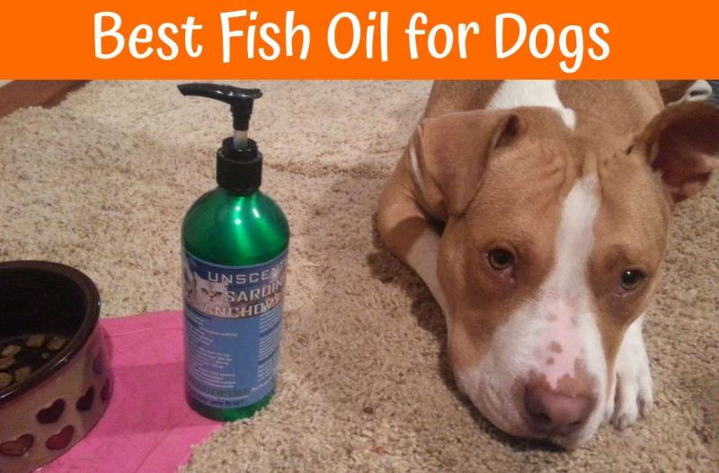 Is It Safe To Give Dogs Fish Oil