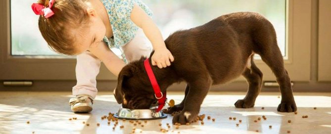 Can A Hypoallergenic Dog Food Contain Wheat