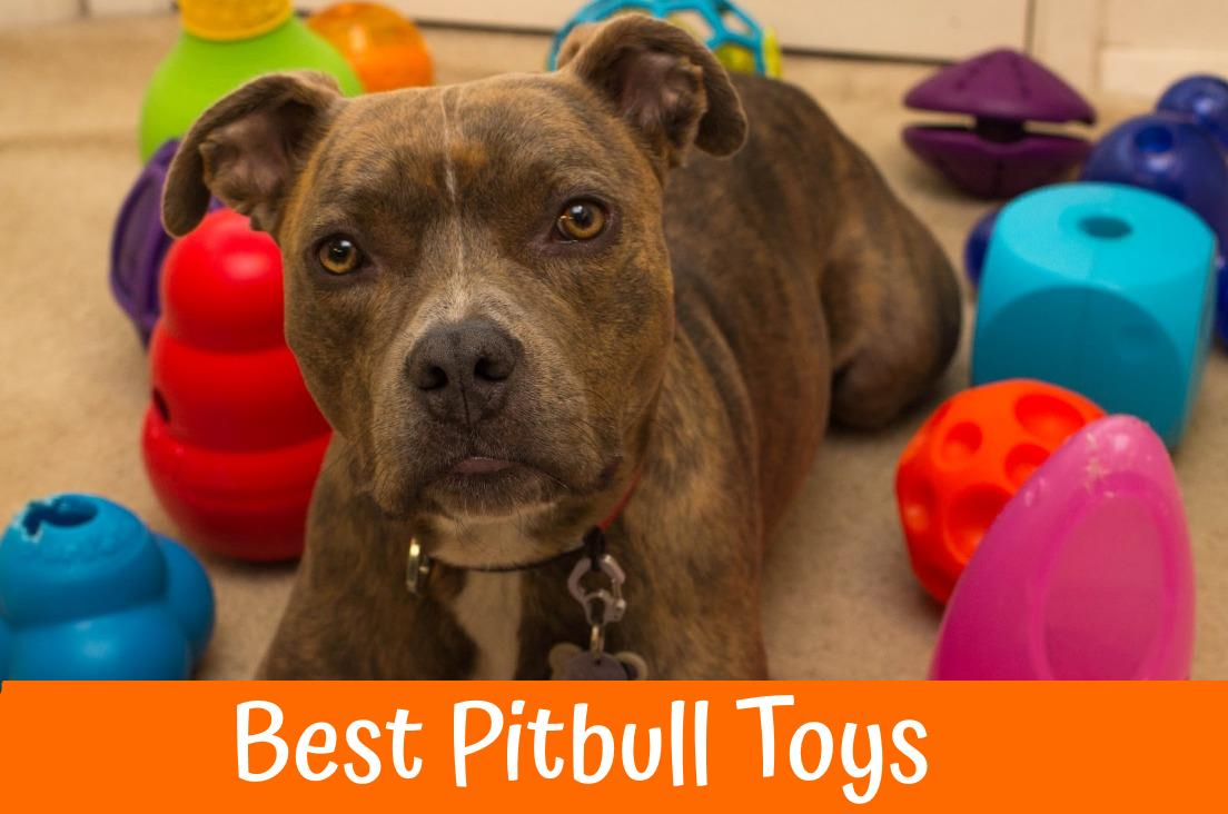 19 Best Pitbull Toys Indestructible