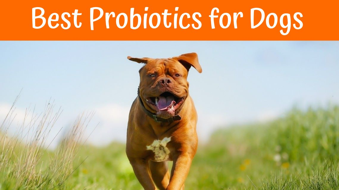 Can Dogs Eat Probiotics