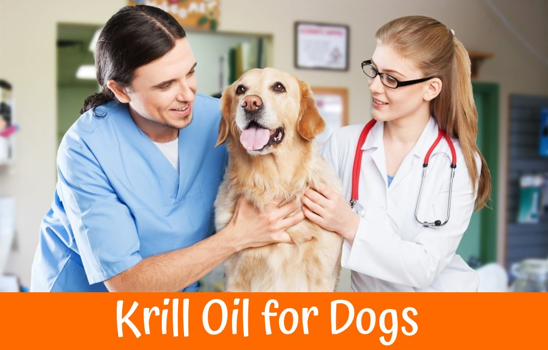 Can Dogs Eat Krill Oil