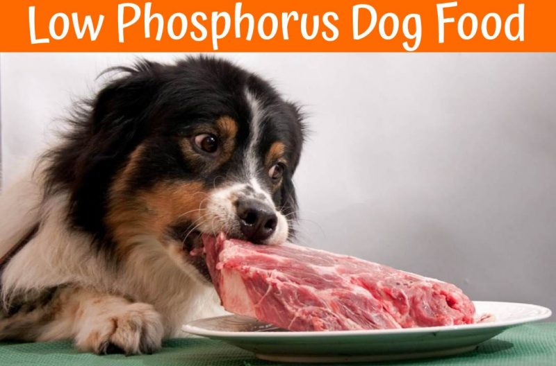 Natural Dog Food Low In Phosphorus