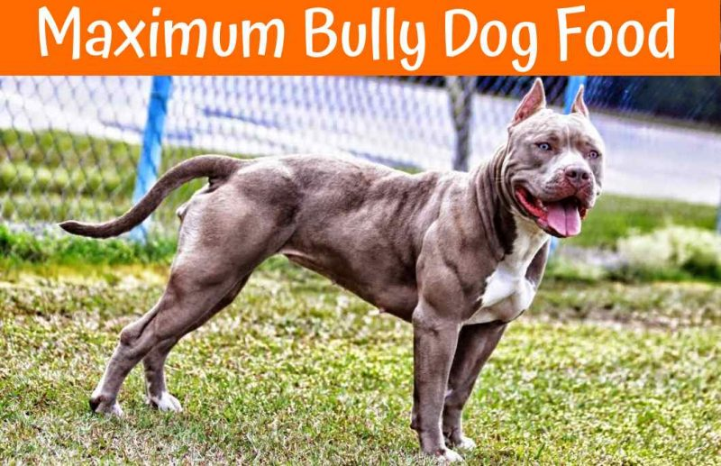 The Best Review and Guide of Maximum Bully Dog Food - US Bones