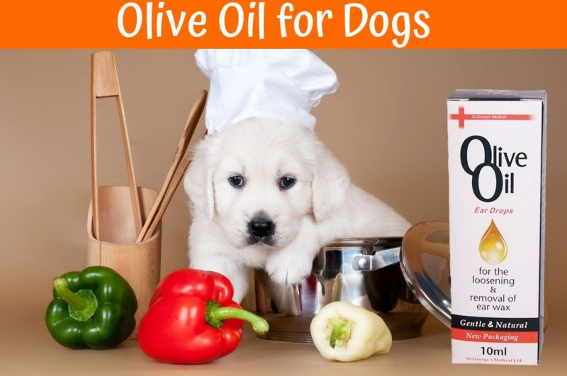 olive oil dogs