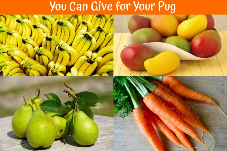 Can I Give Pear To My Dog
