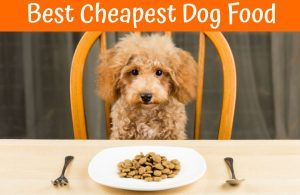 Cheapest Dog Food For Allergies