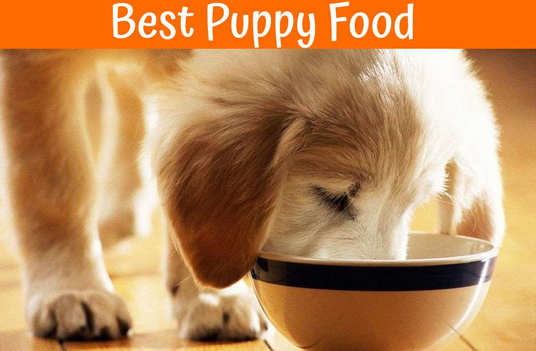 List Of Best Dog Food For Puppies
