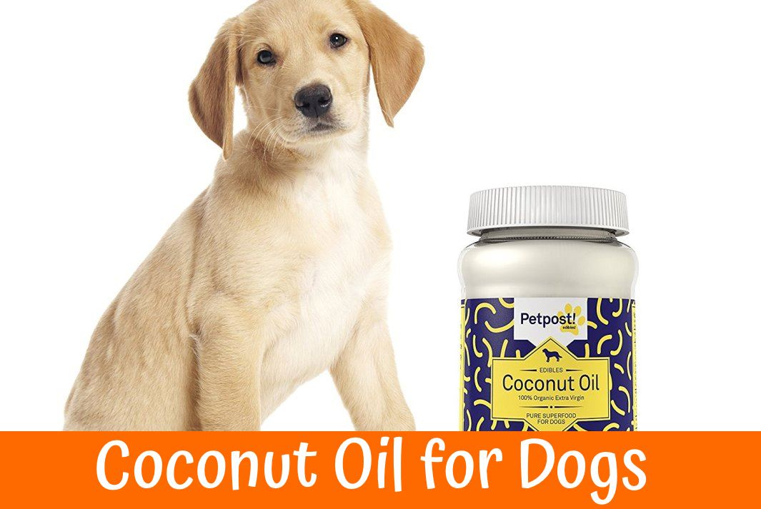 Your dog might be curious about this new bath. He might lick and try to eat the coconut oil, which is fine as a bit of internal coconut oil can add more health benefits to this bath. Because of the oily properties of coconut oil baths, you will want to wash and rinse the coconut oil off your pup after it .