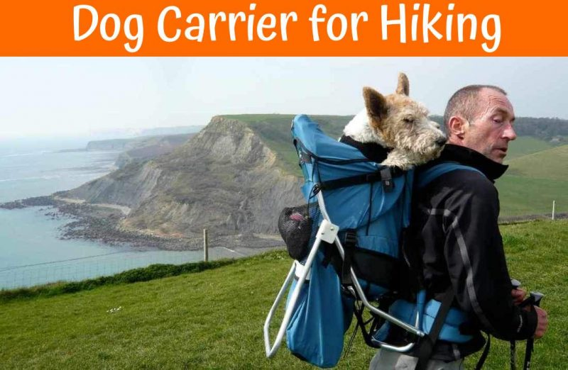 dog carriers for hikers