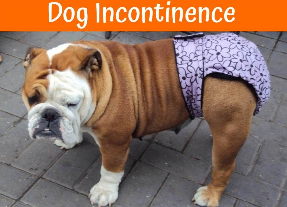 Urinary Incontinence in Dogs: Causes and Treatment