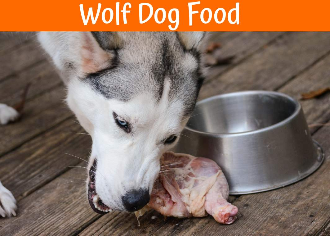 How To Make Holistic Dog Food