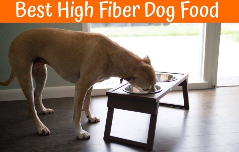 Review Of The Best High Fiber Dog Food In 2018 Us Bones