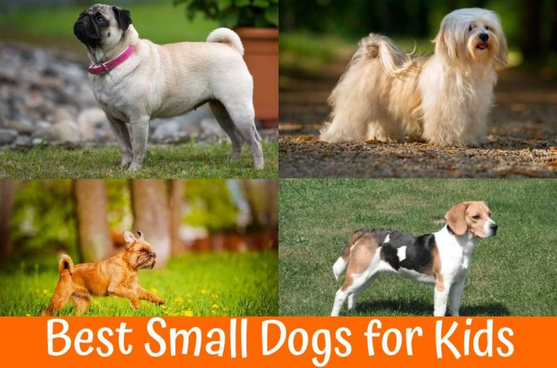 Best Small Dogs for Kids
