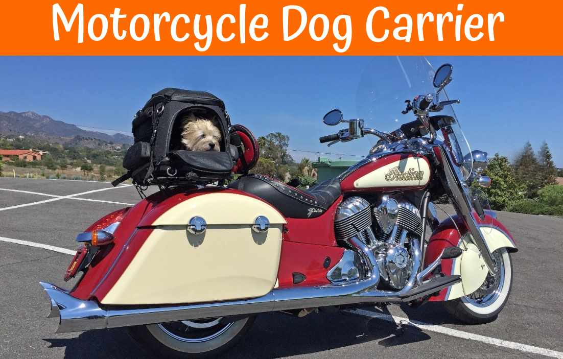 Best Dog Food For Labs >> Best Motorcycle Dog Carrier - Our Guide in 2019 - US Bones