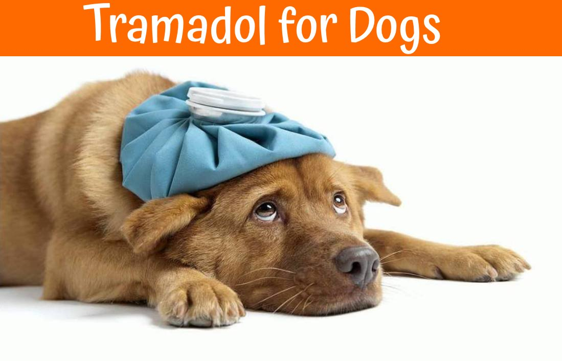 Can You Give Dogs Tramadol For Pain
