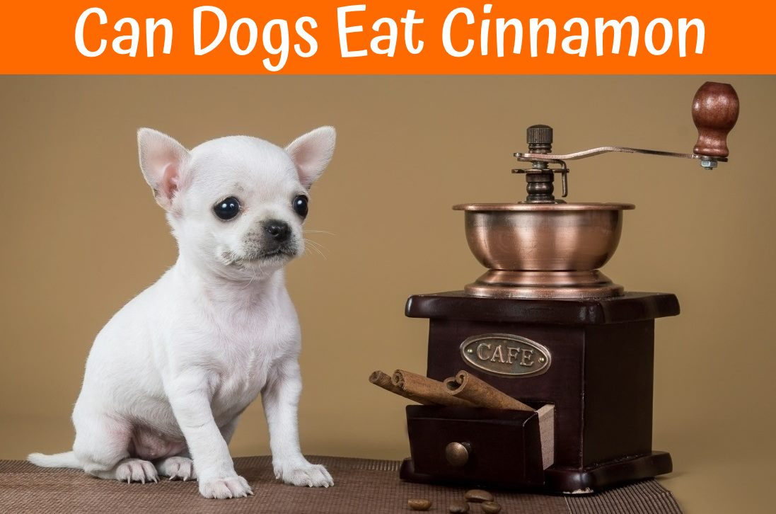 What Spices Can Dogs Eat