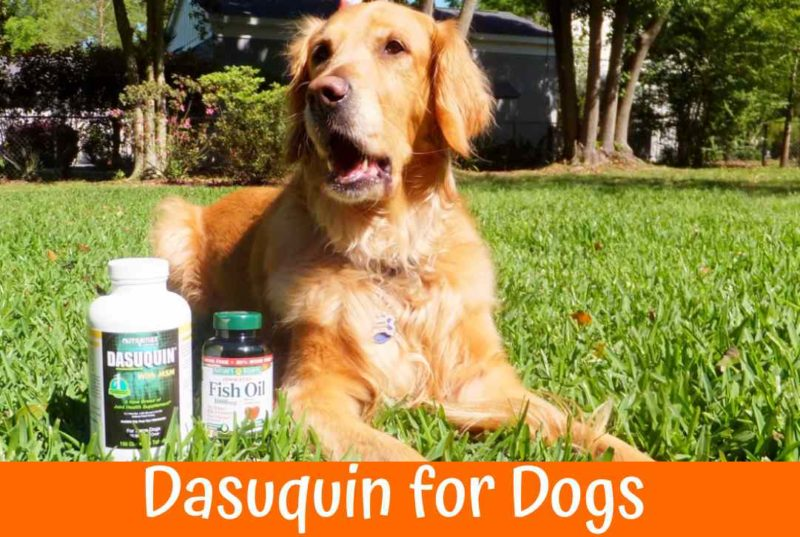 Best Dasuquin for Dogs