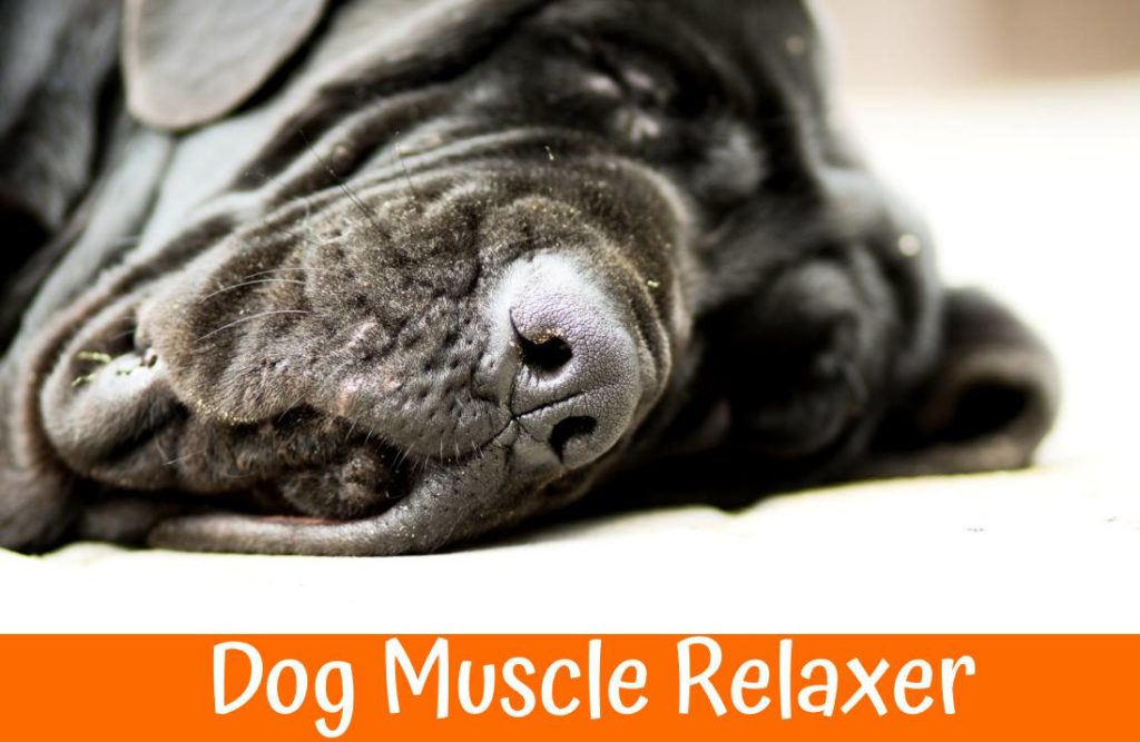Dog Muscle Relaxer