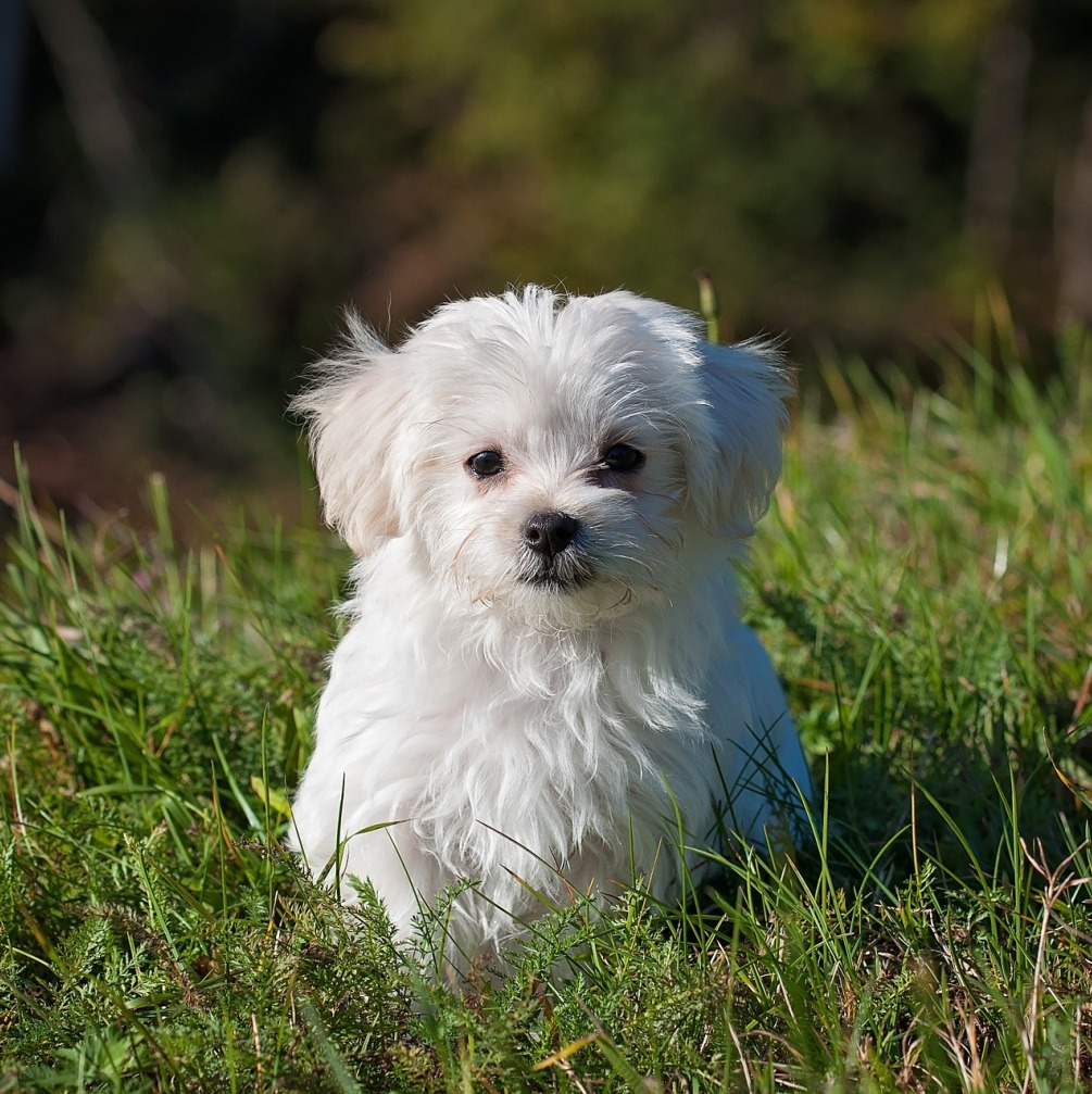 Can Small Breed Dogs Eat Adult Food