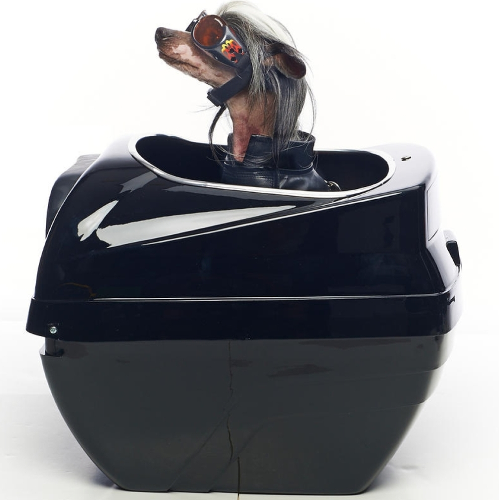 Dog Food And Water Holder For Two Dogs