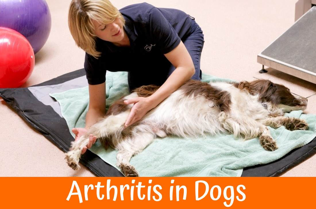 Permalink to Best Medication Dog Arthritis