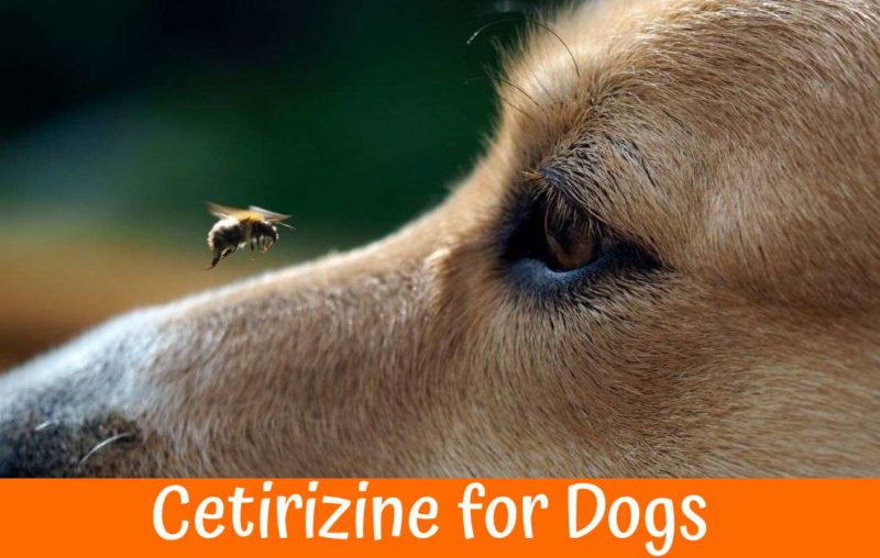 Can You Give Cetirizine To Dogs