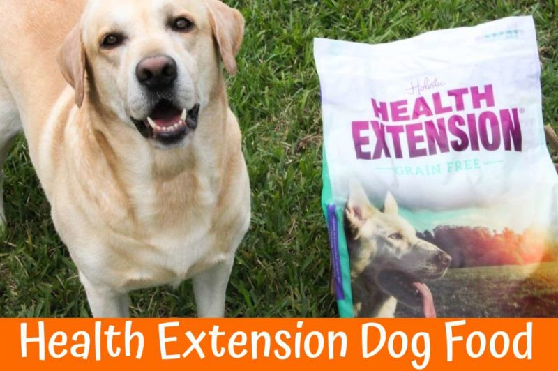 Why Is Health Extension Dog Food Best Us Bones