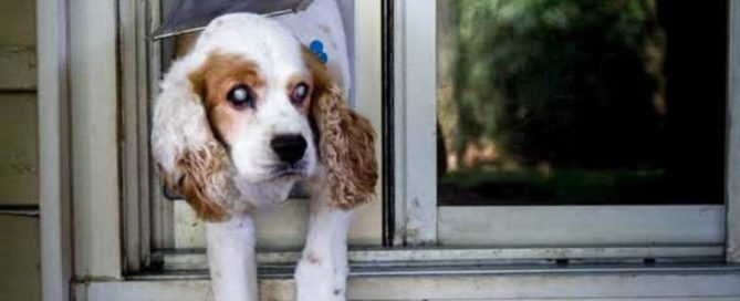 Tips for Living with a Blind Dog