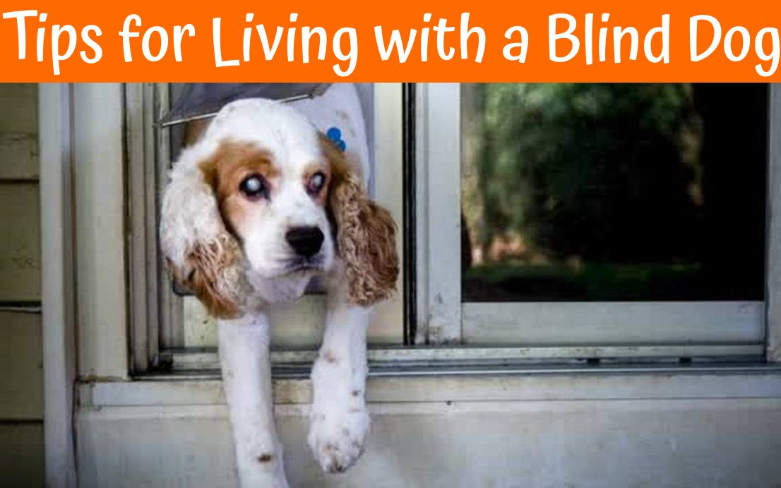 Best Dog Food For Labs >> 21 Helpful Tips for Living with a Blind Dog - Make Them Happy