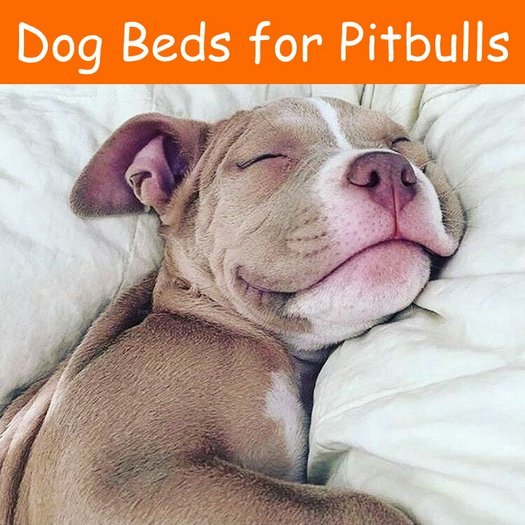 dog beds for pitbulls